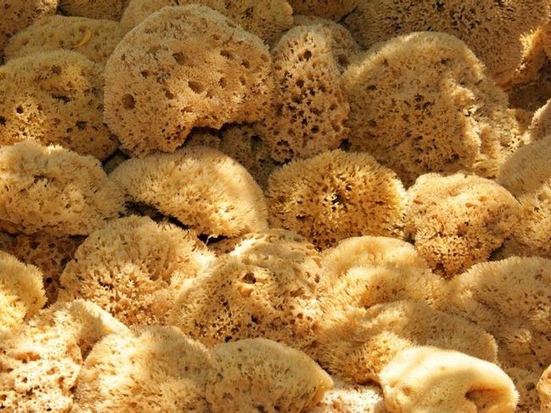 natural sponges - Pagina Itinerari/samos-kos