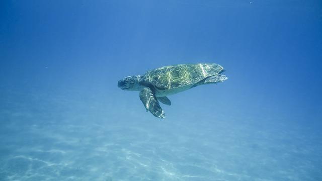 turtle 1608044 640 - cefalonia zante
